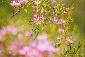Обои на рабочий стол весна цветы
