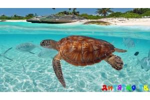 Подводный мир для детей