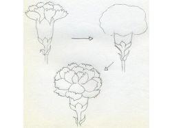Рисунки на 9 мая карандашом
