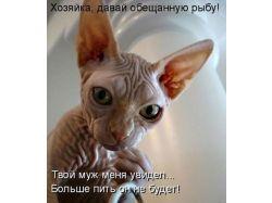 Картинки животные смешные