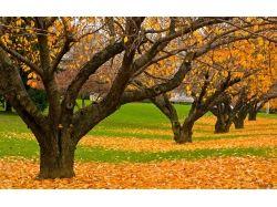 Картинки осень золотая