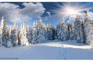 Бесплатно скачать картинки зима