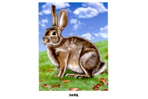 Домашние животные картинки для детей с названиями