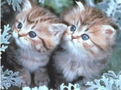 Котята милые картинки