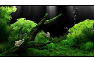 Заставка на комп аквариум