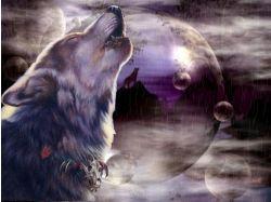Волки любовь картинки