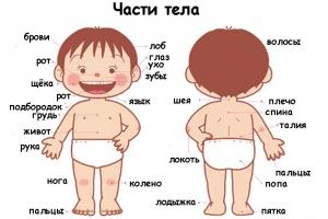 Части тела картинки для детей