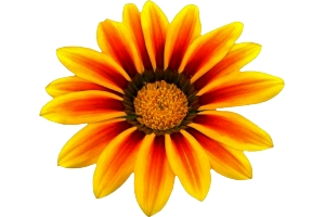 Скачать бесплатно картинки цветы