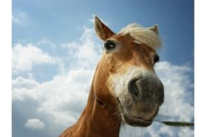Лошади смешные фото