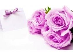 Широкоформатные картинки розы 7