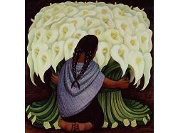 Каллы, картинки цветы