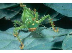 Африканские насекомые фото 3