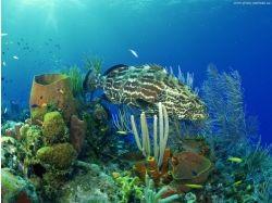 Подводный мир красного моря фото высокого разрешения 7
