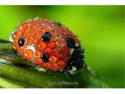 Ужасные насекомые фото с названиями 7