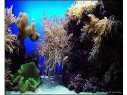 Красивые фото подводный мир