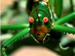 Общественные насекомые фото и название 2