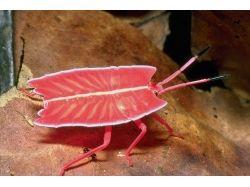Общественные насекомые фото и название 3