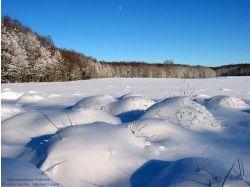 Беловежская пуща фото зима