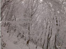 Фото зима с хвойными деревьями