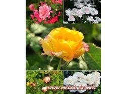 Широкоформатные фото обои на рабочий стол. цветы 7