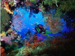 Картинки подводный мир на рабочий стол