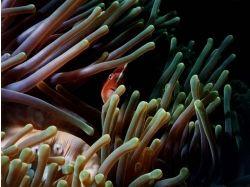 Анимация подводный мир скачать