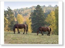 Урал осень фото 3
