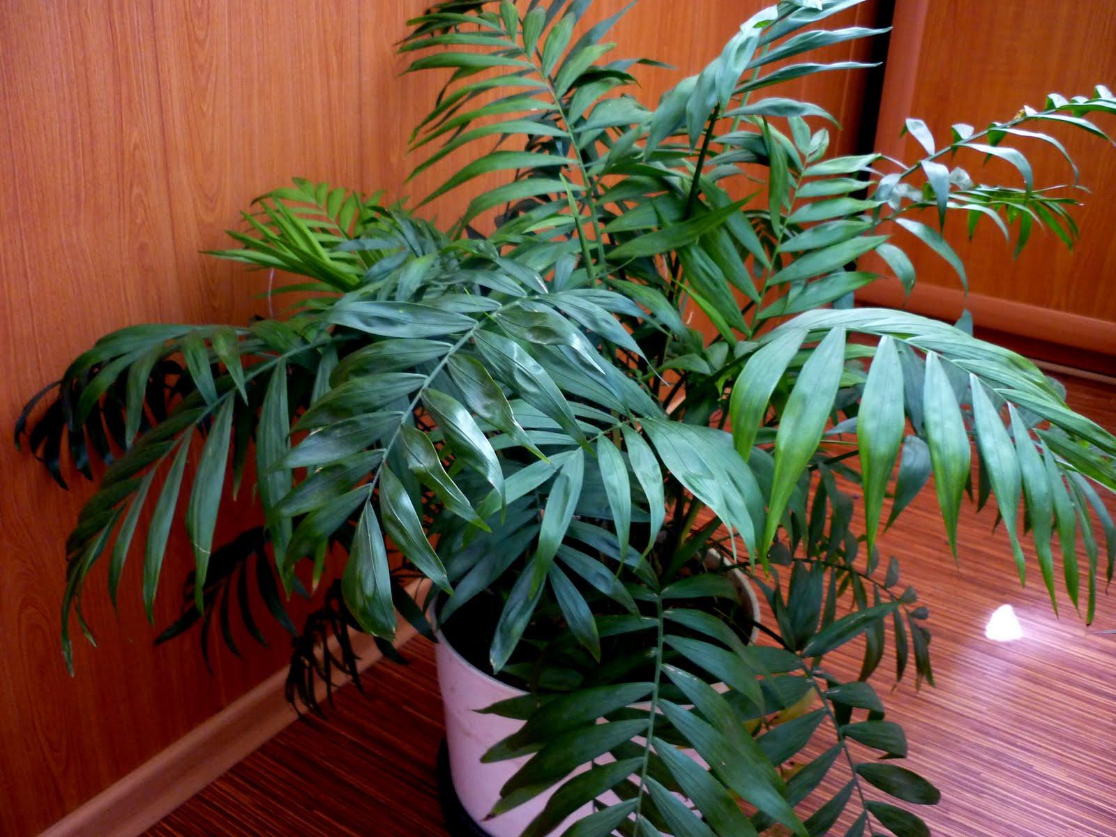 комнатные растения не цветущие фото и названия уход в домашних представляет собой