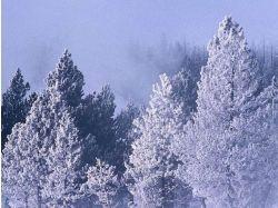 Фото зима пейзаж