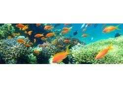 База отдыха подводный мир