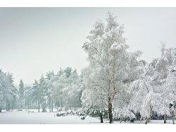 Картинки зима 2012
