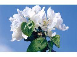 Картинки цветы широкоформатные