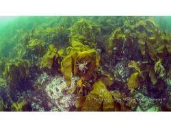 Подводный мир баренцево море