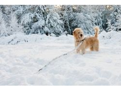 Картинки зима, снег 4