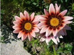 Фото цветы летом 2