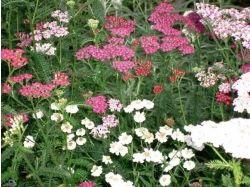 Фото цветы летом 4