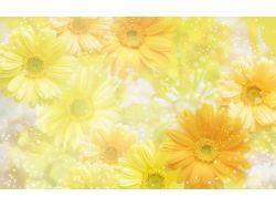 Картинки цветы фотошоп