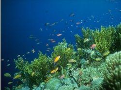 Подводный мир - обои, картинки