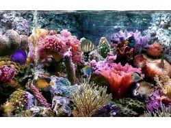 Подводный мир - обои, картинки 2