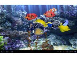 Подводный мир - обои, картинки 4