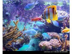Онлайн обои подводный мир 3