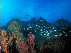 Онлайн обои подводный мир 5