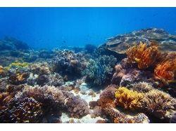 Клипарт.подводный мир