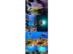 Клипарт.подводный мир 3