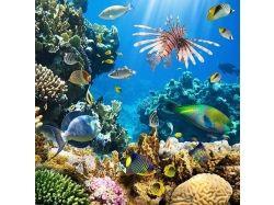 Клипарт.подводный мир 5