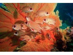 Клипарт.подводный мир 6