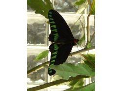 Огромные насекомые фото 3