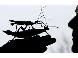 Огромные насекомые фото 5