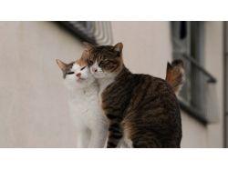 Кошачья любовь фото 4