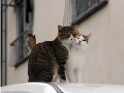 Кошачья любовь фото 6